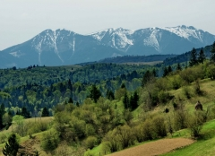 Munții Țibleșului